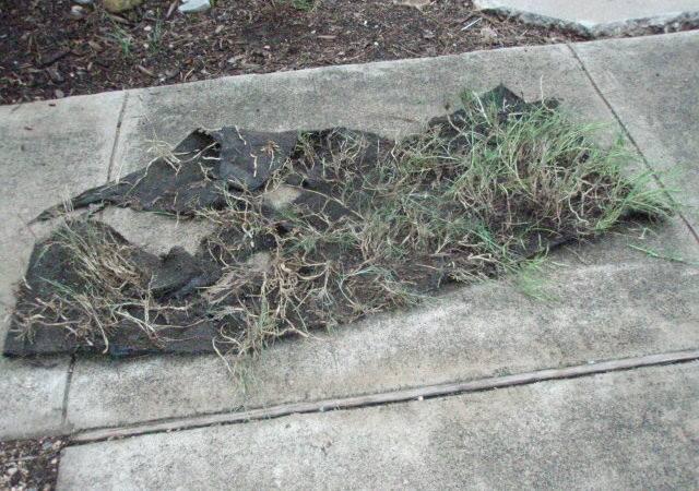 Biogardener Blog Archive Love Weed Fabric