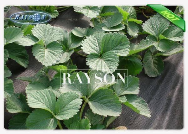 Black Gsm Non Woven Garden Weed Control Fabric Killing Weeds Farm