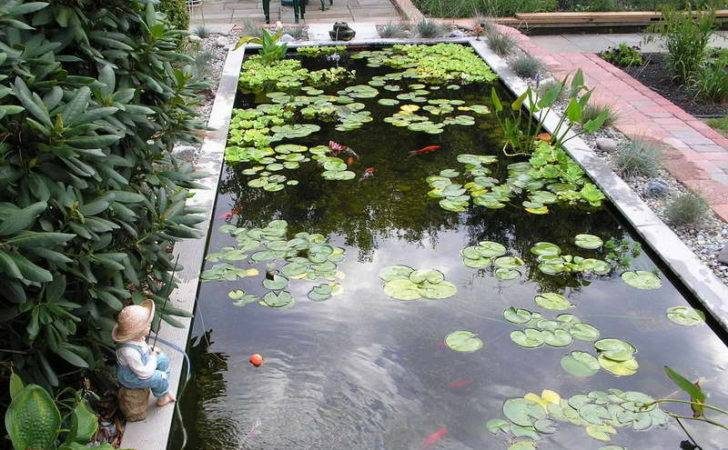 Bloombety Koi Pond Water Plants Build