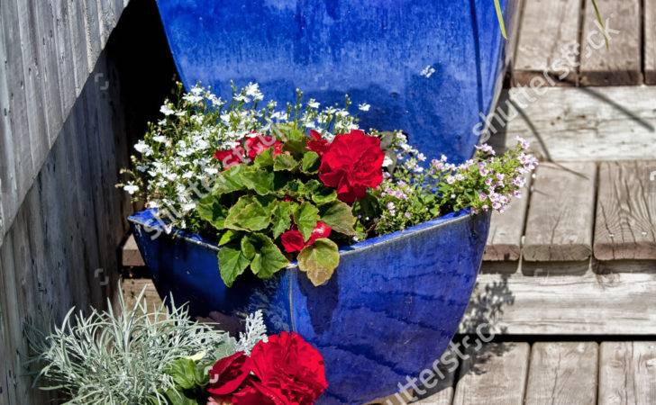 Blue Glazed Terracotta Plant Pots Filled Annual Flowers Used