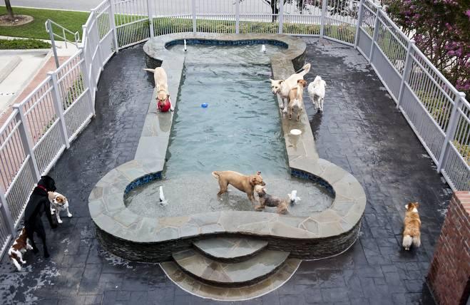 Bone Shaped Dog Pool Breakyourpiggybank