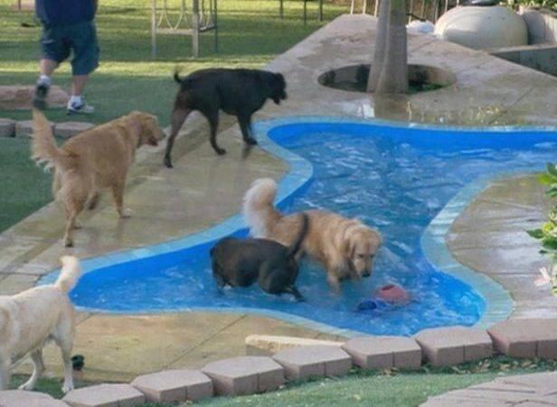 Bone Shaped Dog Pool Visit Hgtv House Yard Pinterest