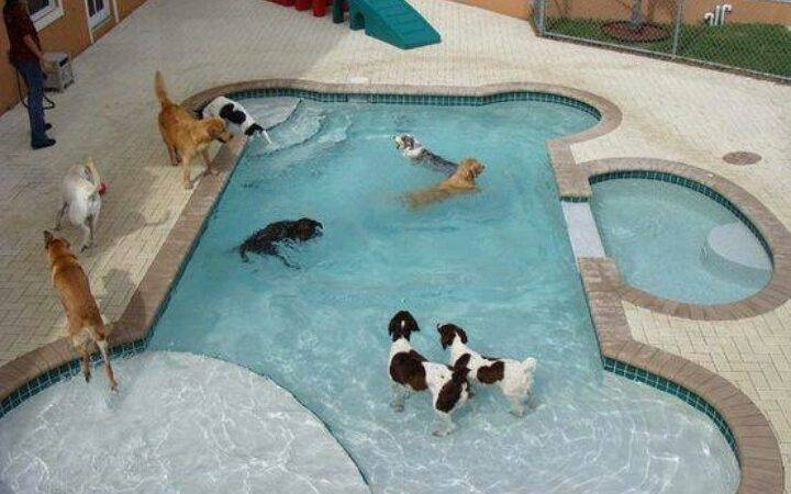 Bone Shaped Swimming Pool Know Dog Would Think Awesome