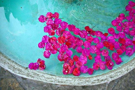 Bouganvillia Pinterest Turquoise Bougainvillea Colors
