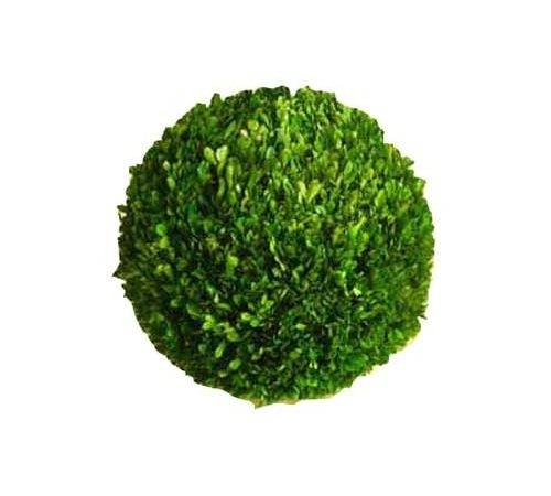 Boxwood Ball Preserved Topiary