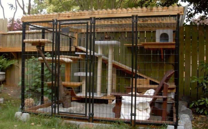 Build Catio Pin Pinterest