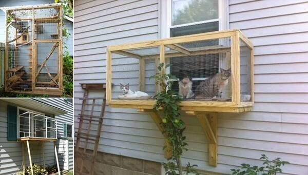 Build Catio Your Cats Enjoy