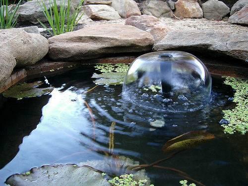 Build Fish Pond Garden