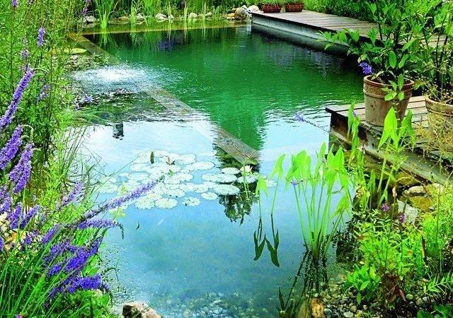 Build Natural Swimming Pool Diy