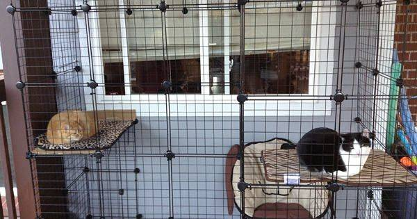 Build Your Own Catio Cat Caboodle Outdoor Enclosure