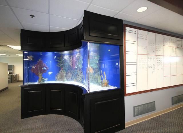 Built Fish Tank Tropical