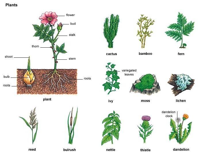 Cactus Noun Definition Pronunciation Usage Notes