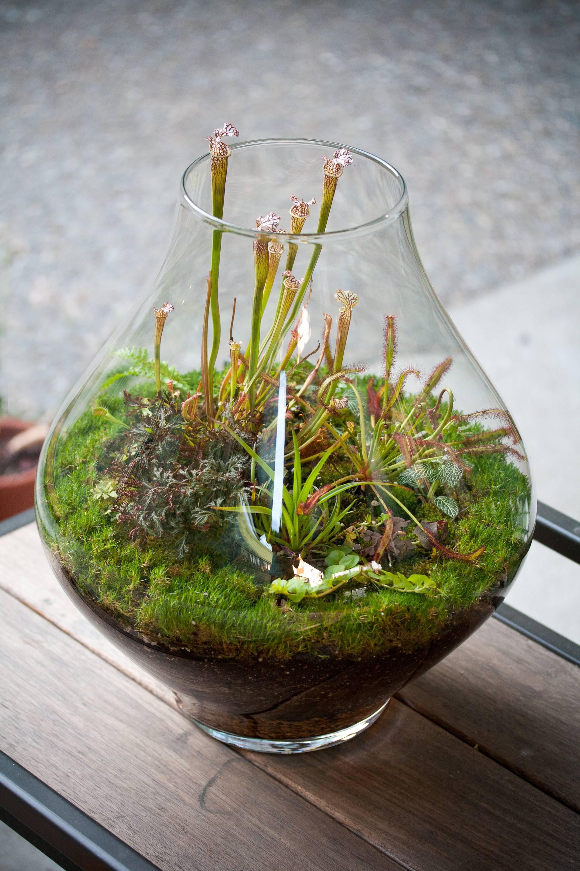 Carnivorous Plants Terrarium Ideas Gardens Minimalistas