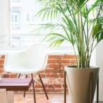 Case Study Furniture Pinterest Mom Planters Cases