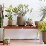 Case Study Planters Accessories Better Living Through Design