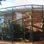 Cat Enclosures Fences Photos Interesting Stuff