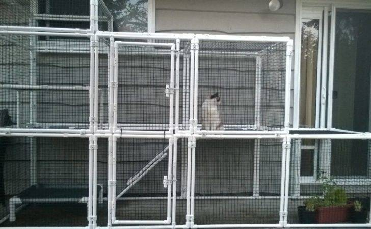 Catio Daddio Safe Outdoor Access Frisky Felines