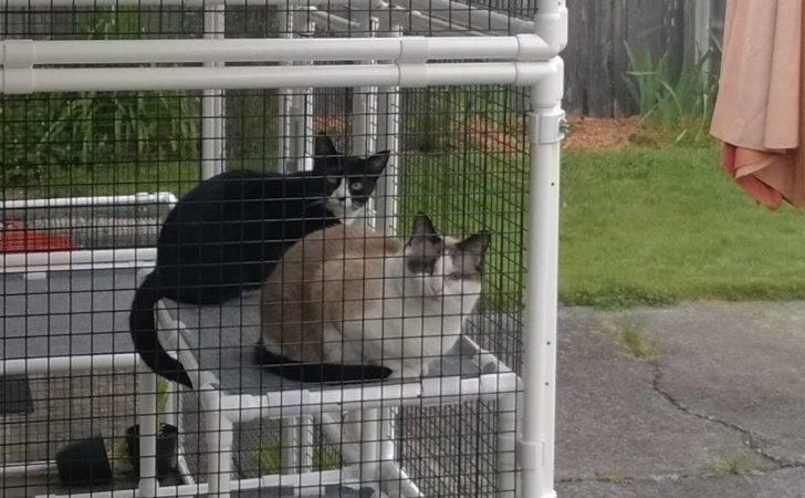 Catio Daddio Safe Outdoor Access Frisky Felines