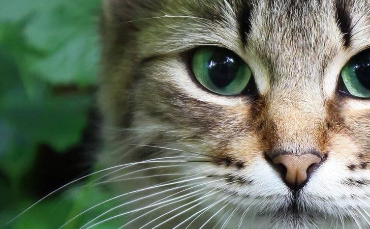 Catio Spaces Custom Diy Catios Cat Enclosures