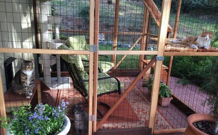 Catios Safe Outdoor Enclosure Cats