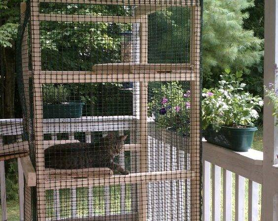 Cattery Designs Catio Pinner Husband Build Gagoy Cat