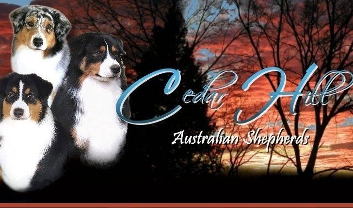 Cedar Hill Aussies