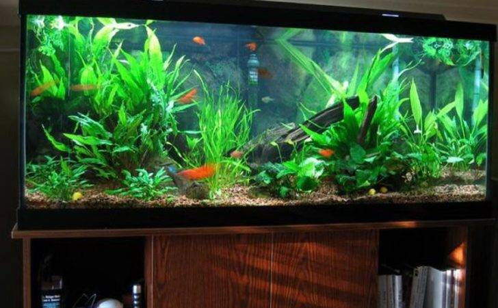 Cheap Fish Tanks Tank Tropical Decor Ideas