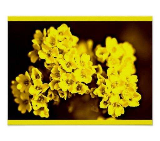 Color Therapy Yellow Poster