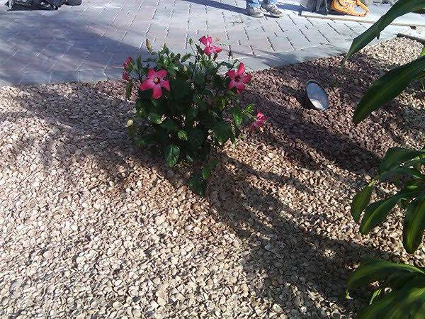 Colored Shell Mulch Alternative Ground Cover Behance