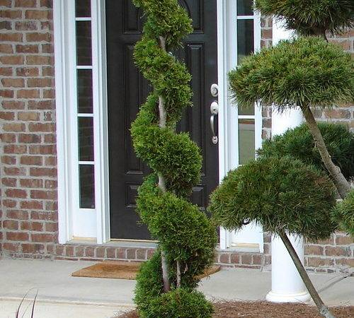 Columnar Plants Add Interest Any Landscape Arborvitae