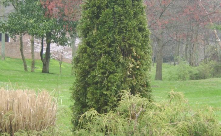 Columnar Plants Nashville Landscapes
