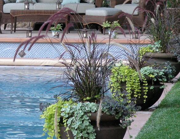 Container Potted Gardens Eclectic Pool San