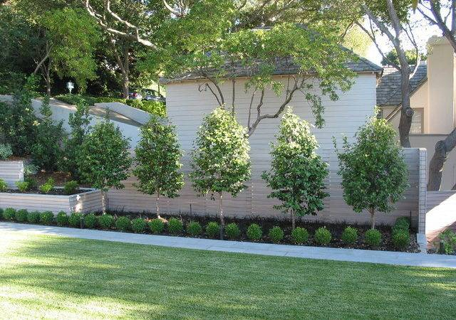 Contemporary Landscape Conifer Landscaping Shrubs Ideas Boundry Wall