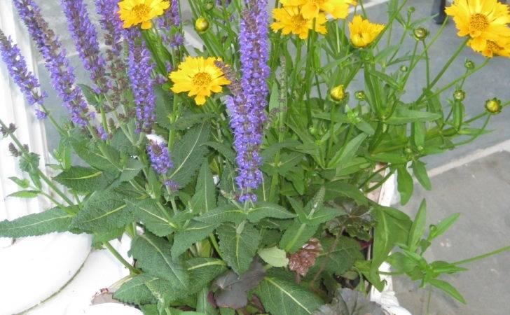 Contrast Purple Yellow Vase Arrangements Flowers Pin
