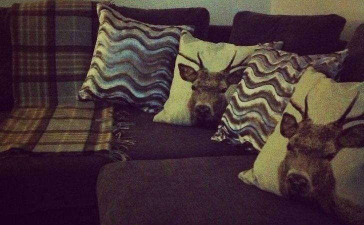 Cosy Highland Cushions Living Room Pinterest