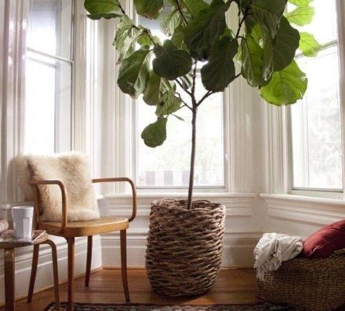 Cozy Interior Decorating Small Unique Indoor Plants