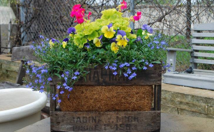 Crate Spring Flowers Container Planting Pinterest