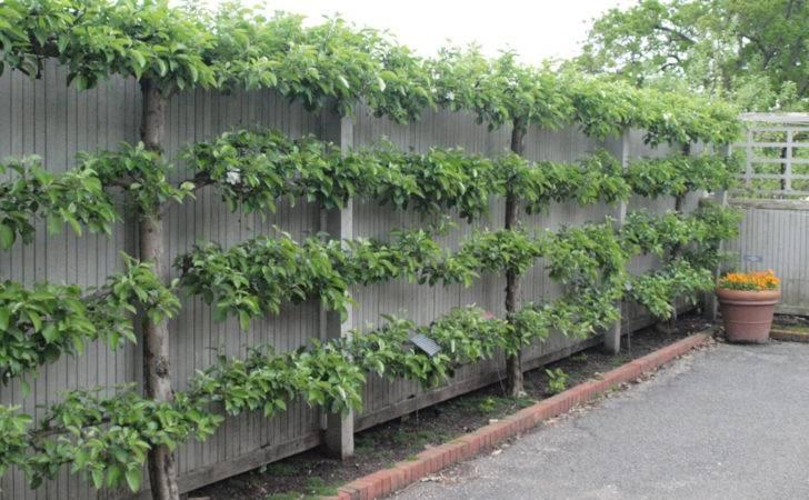 Creative Fences Plant Farm
