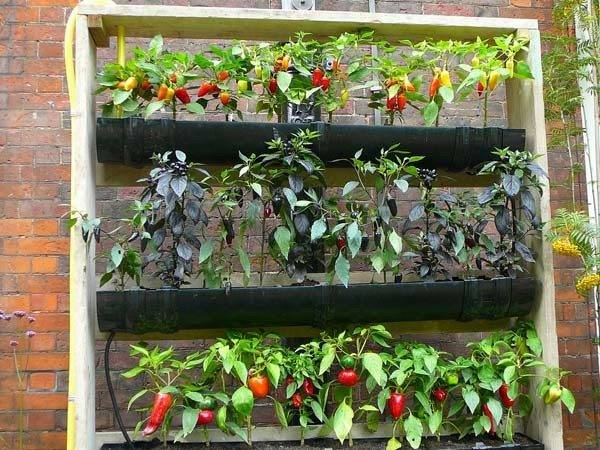 Creative Innovative Rain Gutter Garden Ideas