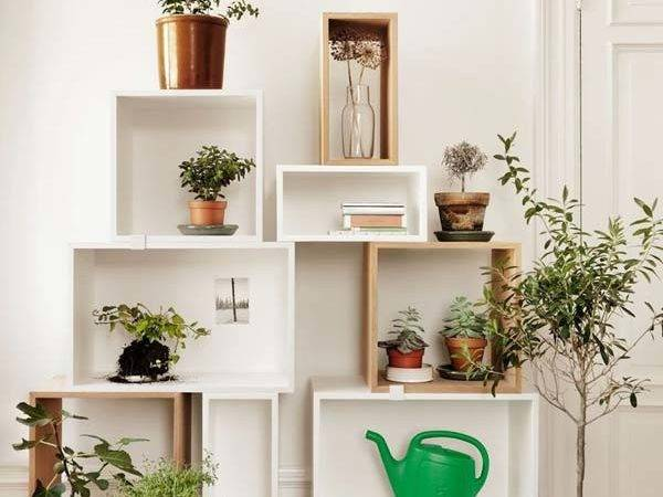 Creative Interior Decorating Small Indoor Plants Wooden