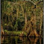 Cypress Tree Landscape Poem Lovely Pinterest