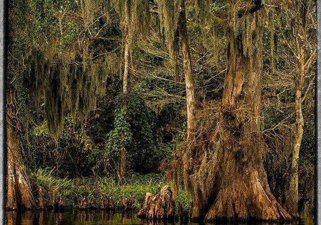 Cypress Tree Landscape Poem Lovely Pinterest