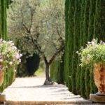 Cypress Trees Gardening Pinterest