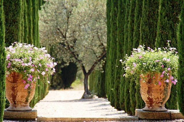 Cypress Trees Gardening Pinterest