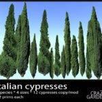 Cypress Trees Landscape Italian Landscaping