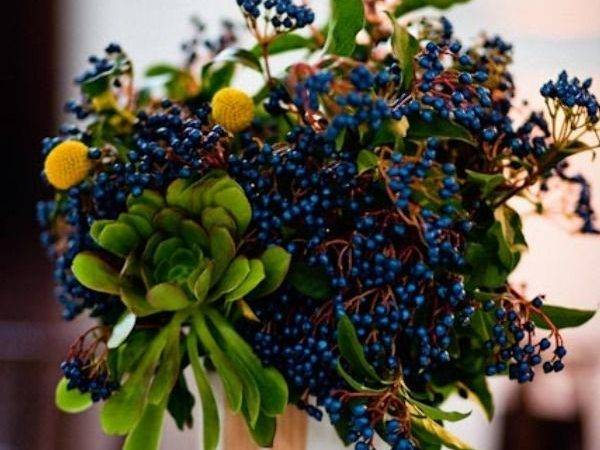 Dark Blue Berries Garden Flowers Pinterest