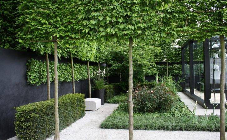 David Dangerous Pleached Trees Stilted Raised Hedging