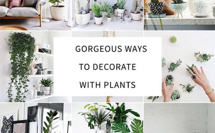 Decorate Your Interior Green Indoor Plants Save Money