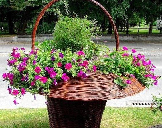Decorations Creative Garden Design Gardening