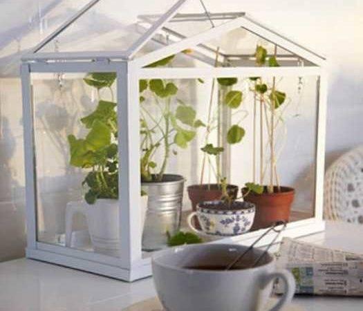 Design Ideas Indoor Plants Modern Interior Decorating Eco